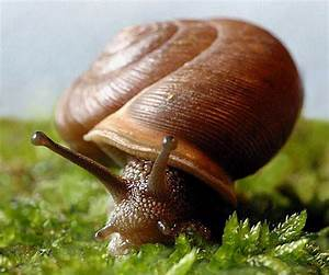 Snail | Animal Wildlife