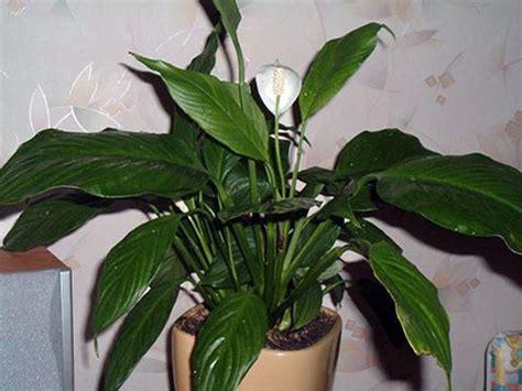 Common House Plants Names Best