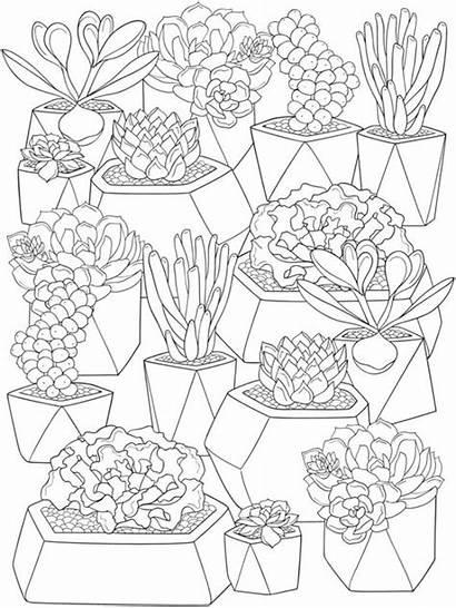 Coloring Pages Succulents Succulent Cactus Flower Colouring