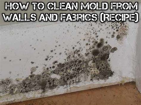 How To Clean Mold And How To Clean How To Clean Mold From Walls And Fabrics Recipe All