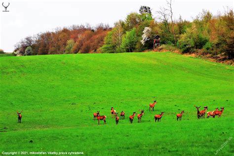 na prvomájovej paši.. - poľovnícka fotografia, fotka ...