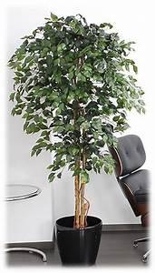 Ficus Benjamini Vermehren : kunstpalmen kunstpflanzen kunstpalmen ~ Lizthompson.info Haus und Dekorationen