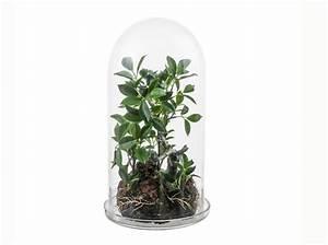 Acheter Terrarium Plante : terrariums d couvrez ces mini serres ultra d co elle d coration ~ Teatrodelosmanantiales.com Idées de Décoration