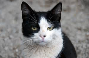 black and white cats black and white cat names 37 awesome names for your cat
