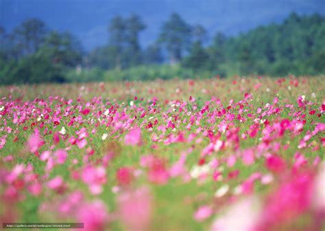 fleur de bureau tlcharger fond d 39 ecran printemps fleurs t fonds d 39 ecran
