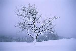 Gartenfest Im Winter : wolfgang herath pflanzen ~ Articles-book.com Haus und Dekorationen