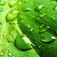 Green Eco News (@greeneconews) Twitter