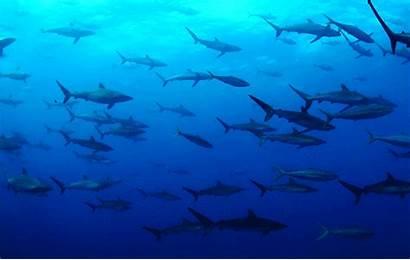 Underwater Sea Gifs Diving Ocean Shark Sharks