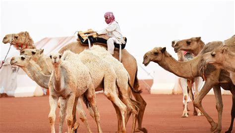 Inside Saudi Arabia's 'miss Camel' Beauty Pageant