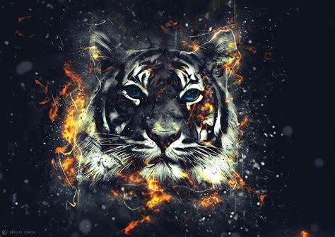 keren  gambar wallpaper harimau joen wallpaper