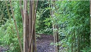 Bambou A Planter : vid o planter un bambou dans son jardin ~ Premium-room.com Idées de Décoration