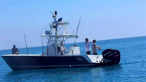 cobia florida fishing