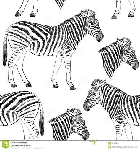 Zebra Stock Vector Image 59639975