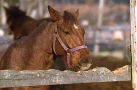 cribbing  horse owners resource