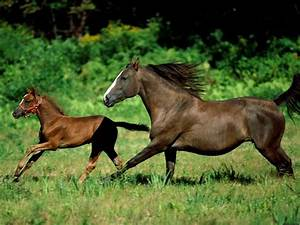 ANIMALS OF PLANET EARTH: CABALLOS