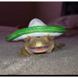 Cute Crested Gecko