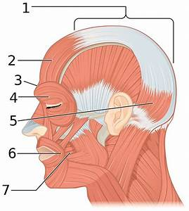 Pin By Melissa Montanez On Anatomy  Face Muscles