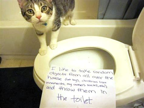 pictures  cat shaming cattime