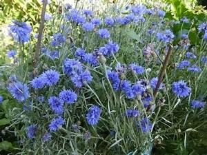 Winterharte Pflanzen Liste : winterharte dauerbl her im garten hausidee ~ Michelbontemps.com Haus und Dekorationen