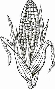 Corn Sketch Templates