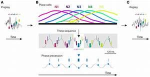 Cartoon Model Of Preplay  Theta Sequences  Phase