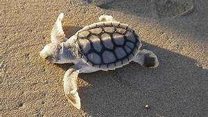 Unexploded WWII bombs buried where endangered turtles nest ...