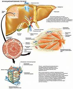 Диабет 2 типа лечение методом скачко