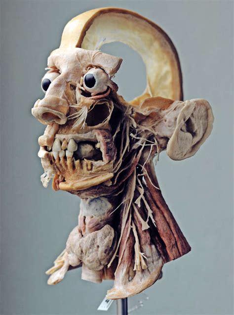 body part preserving workshop tours gunther von hagens