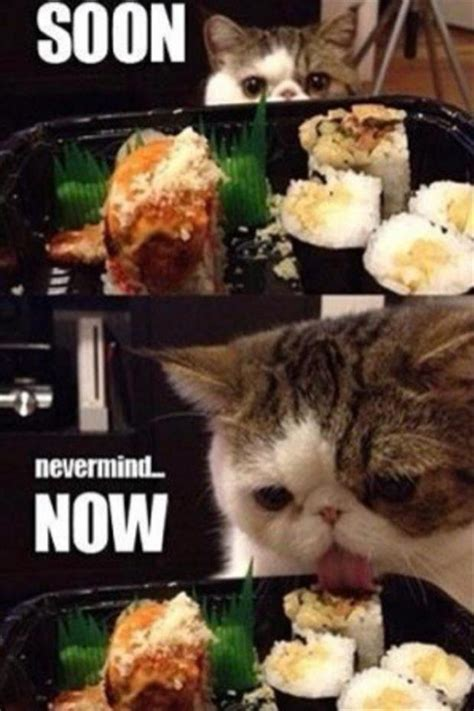 Cat Soon Meme - funny cat pictures with captions with guns with quotes without captions with words with sayings