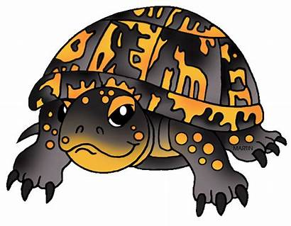 Turtle Clipart Tortoise Box Turtles Land Gopher