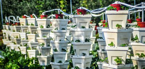 Vertical Gardening Strawberries by Reinvented Vertical Gardening Grows Up 171 Bombay Outdoors