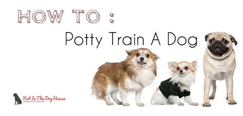 housebreaking how to potty a or puppy not in the housenot in the house