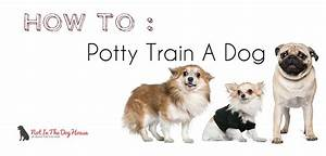 housebreaking how to potty train a dog or puppy not in With how to properly train a dog