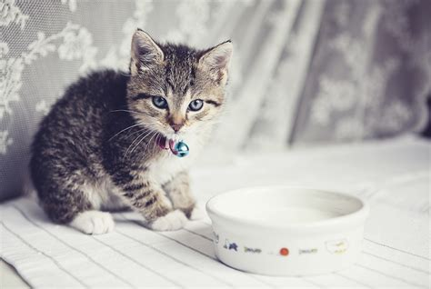 Is It Ok For Cats To Drink Milk? Howstuffworks