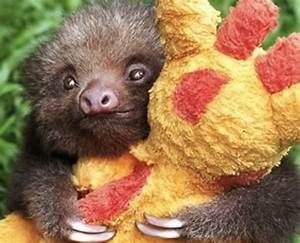 15 Adorable Photos That Prove That Sloths Are The Best ...