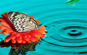 Butterfly Drops Wallpapers | HD Wallpapers | ID #13997