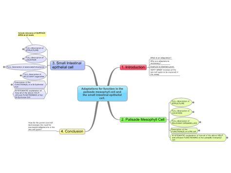 adaptations  cells mind map mindmanager mind map