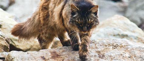 hawaii updates rules  address feral cats  boat harbors