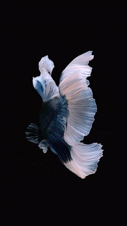 Iphone Fish Wallpapers Apple Ios Apples