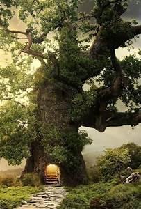Download Forest Tree Fantasy Forest Wallpaper for desktop
