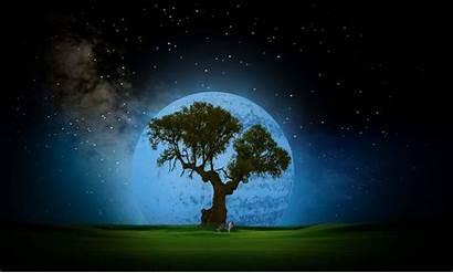 Night Tree Dreamland Fantasy Wallpapers Dreamy Background