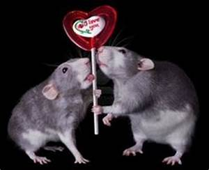 1000+ images about Rats References on Pinterest | Rats ...