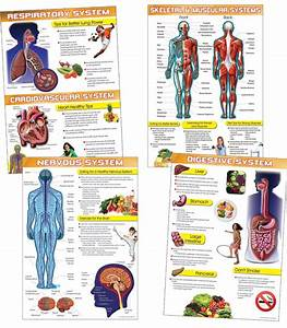 The Human Body And Health Tips Bulletin Board Set Consists