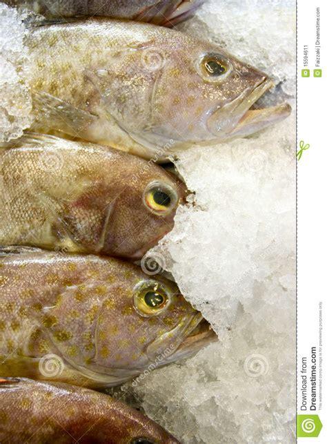 grouper fresh market