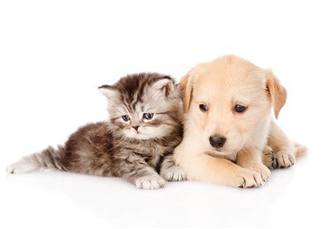 Free Cute Dog And Cat Wallpaper Hd