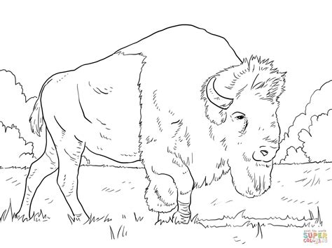 Kleurplaat Go Water by Water Buffalo Coloring Pages Get Coloring Pages