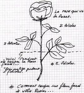 Comment Tailler Les Rosiers : comment couper les fleurs fan es de vos rosiers ~ Nature-et-papiers.com Idées de Décoration