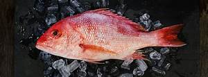 American Red Snapper - Seattle Fish Co.