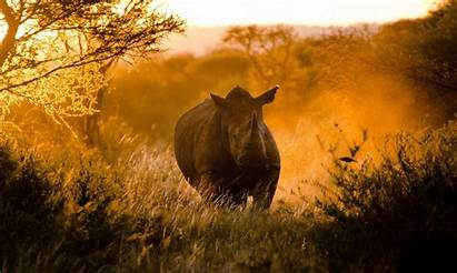 Wild Animal Wallpapers Animals Cool Px Planet