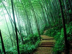 wallpapers: Bamboo Forest Wallpapers